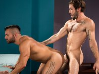 An Active Role Raging Stallion