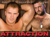 Attraction Raging Stallion