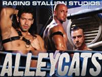 Alley Cats Raging Stallion