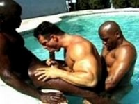 Nubian Horses Scene 1 Gay Video Base
