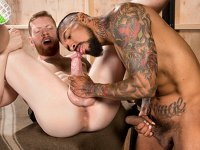 Sniff and Lick Raging Stallion